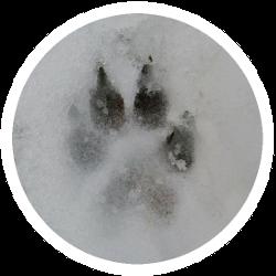 Eine Hundepfote auf einem Block gefrorenem BARF-Futter