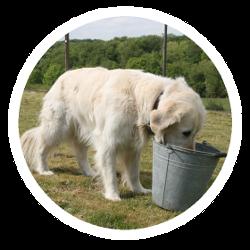 Ein Hund vor einem Eimer