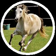 Ein aktives, übergewichtiges Pferd