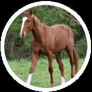 Ein untergewichtiges Pferd