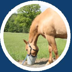 Ein Pferd vor einem Eimer voll Futter