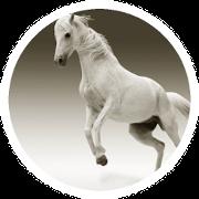Ein springendes Pferd mit Hufproblemen