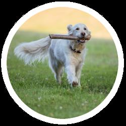 Ein Hund mit einem Stock als Hundespielzeug