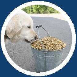 Ein Hund vor einem Eimer voll Futter