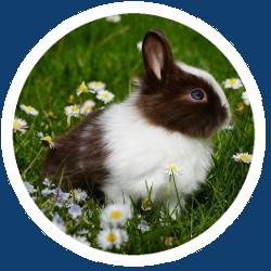 Ein Kaninchen, dass auf einer Wiese gelangweilt auf Tierbedarf wartet