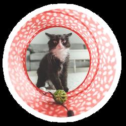Eine Katze mit einem Tunnel und einem Ball als Katzenspielzeug