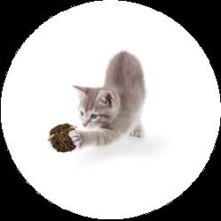 Ein Kitten, dass mit einem Futterball spielt