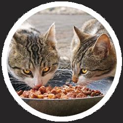 Zwei Katzen vor einem Napf voll Nassfutter