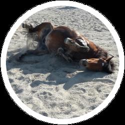 Reitplatz mit zufriedenem Pferd